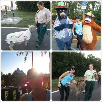 Animal Kingdom Collage