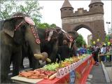 PT Observation Time (& Elephants HavingBrunch!)