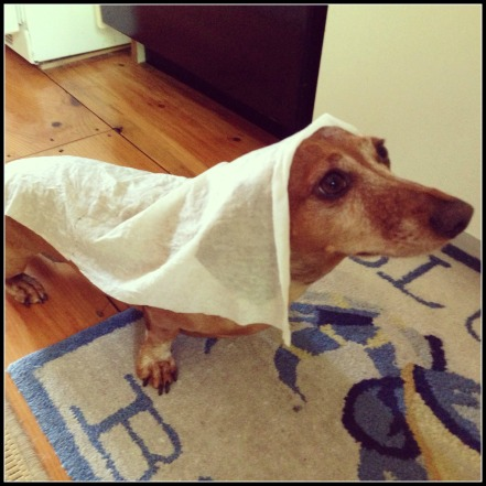 "Maddie's ""Hot"" Dog Tip: Beat the heat with cool, wet paper towels!"
