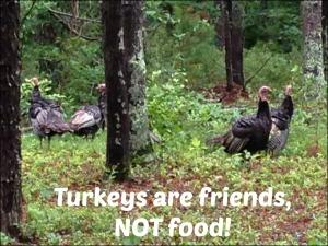 Turkeys are Friends