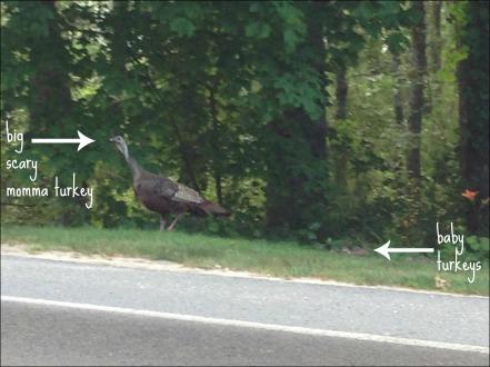 turkeys on a run