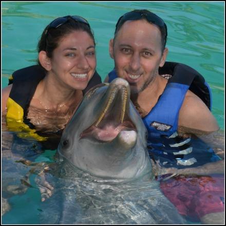 Dolphin Swim 1