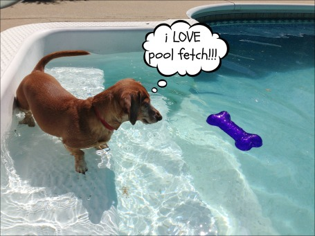 Pool Fetch 1