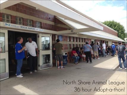 NSAL Adopt-a-Thon