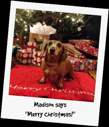 Madison Christmas 2014