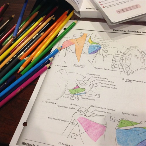 Studying Coloring